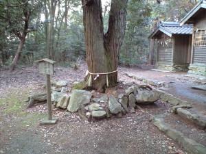 関山神社 奥の宮 亀石とご神木