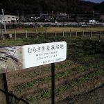 むらさき麦栽培地・藤川本陣跡