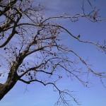 2016-02-02 柿の木