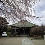 桜の花と観光協会