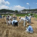 平成29年度「むらさき麦」オーナー募集が始まりました