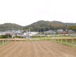 麦畑越しに見る藤川の山