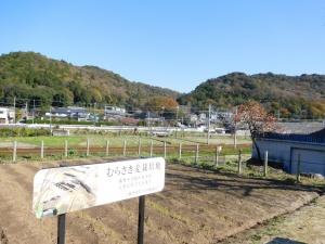 むらさき麦の畑越しに見た藤川の山