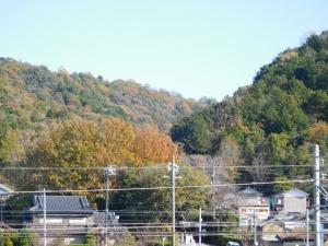色づく藤川の山