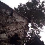 藤川宿資料館(旧・村役場)の思い出