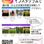 藤川宿・むらさき麦のインスタグラム祭り