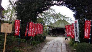 明星院イヌマキの門と糸桜