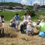 むらさき麦 収穫祭・感謝祭